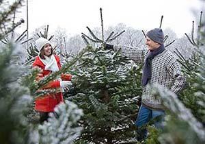 Douglasie Weihnachtsbaum Kaufen.Wald Produkte Winnmann